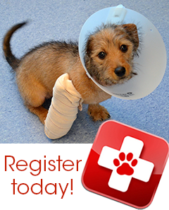 Pet First Aid - Register Today