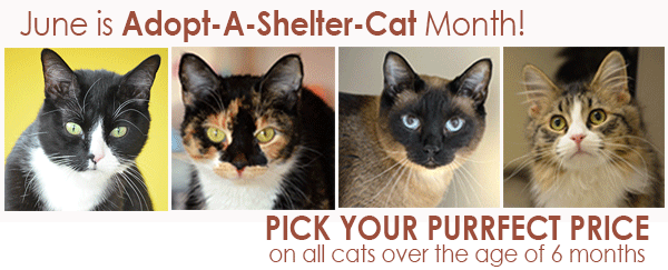June is Adopt-A-Shelter-Cat Month