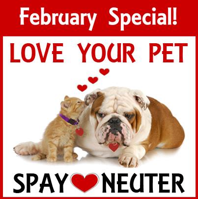 February Special Spay/Neuter