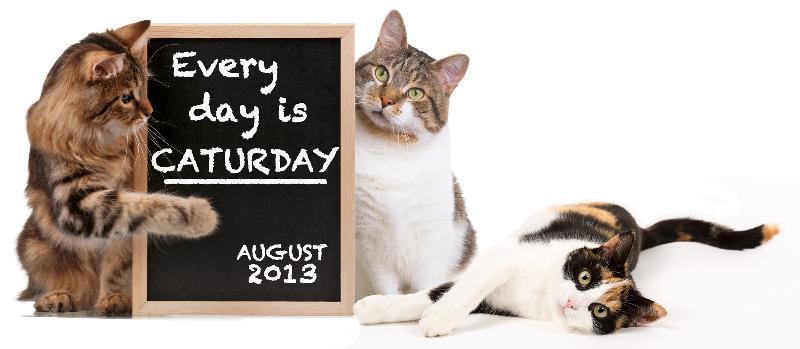 Caturday Adoption Special