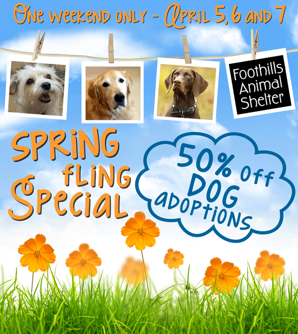 Spring Dog Adoption Special