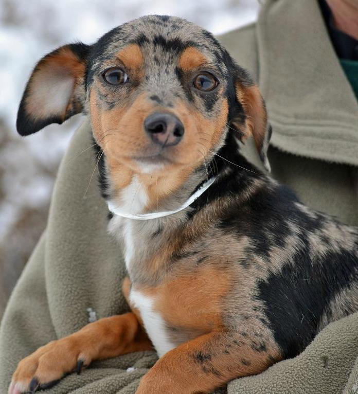 Oscar, adoptable dog