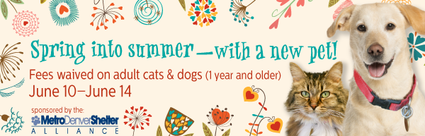 Adoption Fees Waived - Summer Special