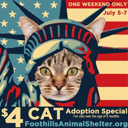 $4 Cat Adoption Special