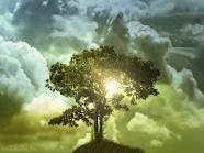 tree of life with sun shining through