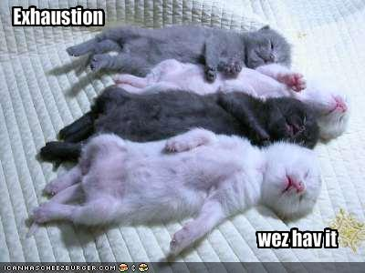 exhausted and sleeping kittens