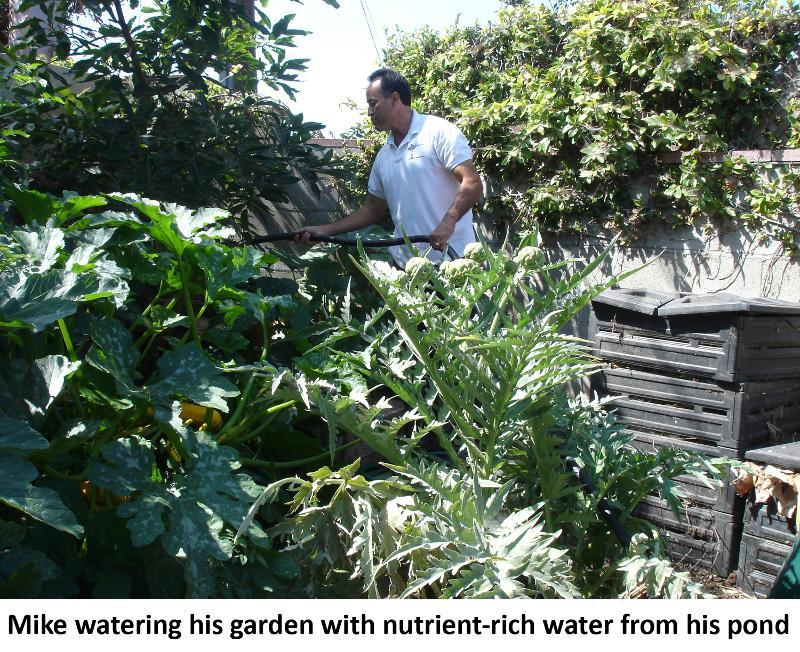 Garcia watering garden