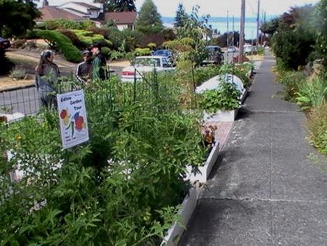 Parking Strip Garden