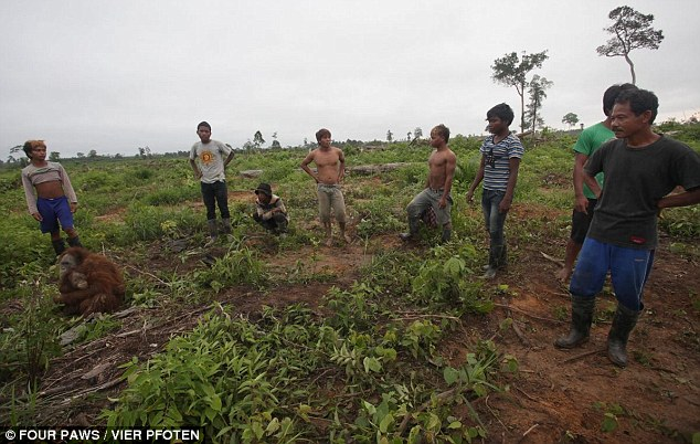 Victims of Palm Oil