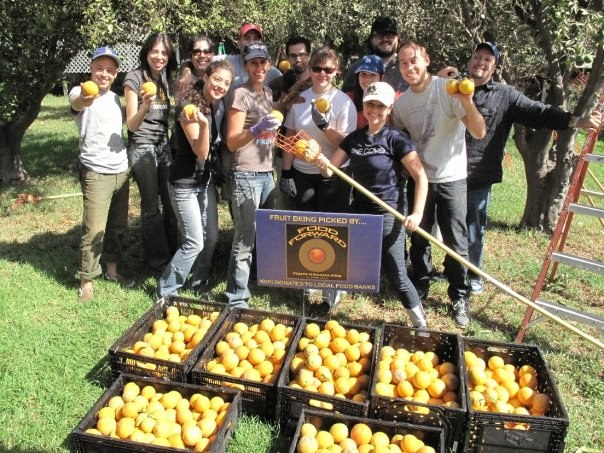 Food Forward fruit harvest