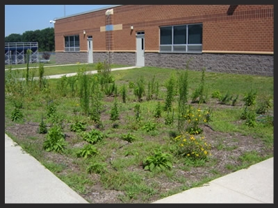 Timber Creek Rain Garden