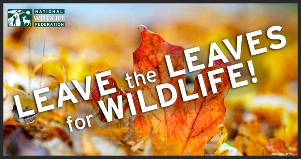 Leave the Leaves for Wildlife