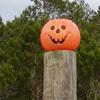 Pumpkin on Post Photo