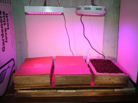 Grow Light Table