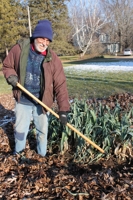 Leek Bed with Leaves