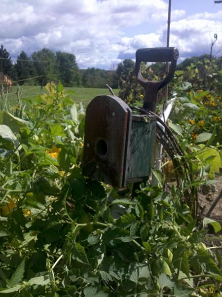 The Winner's Garden