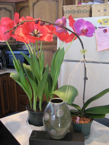 Tulips, Orchid, Vase
