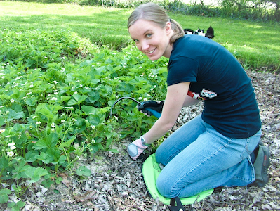 Miese weeding strawberries