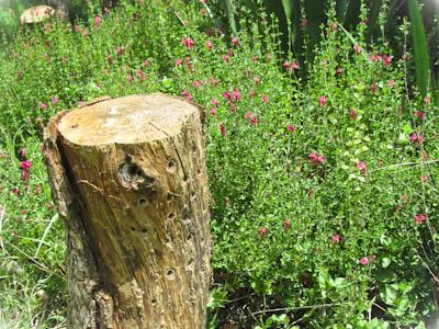 Bee Nesting Log