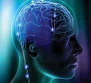 Brain Tour
