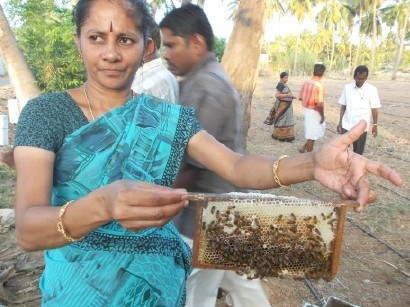 Bee Project FFC India