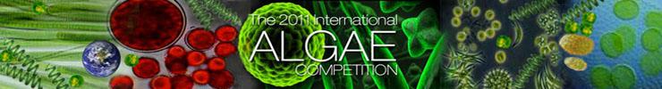 Algae Competition Head 10