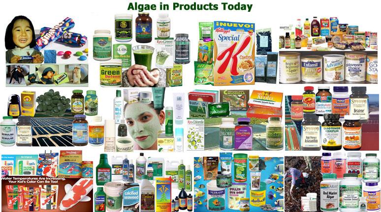 algae competition new food recipes