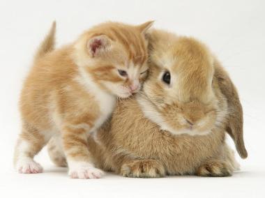 Kitten with Bunny Friend