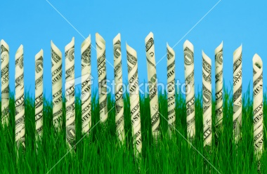 dollars growing in grass