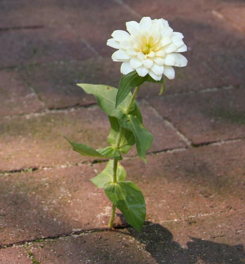 (Flower)
