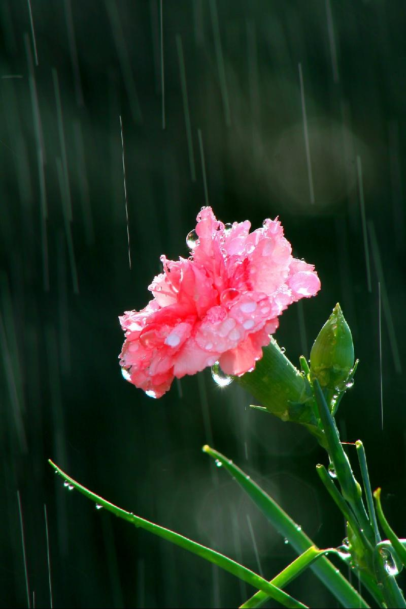 flowerwithrain