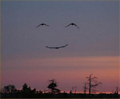 birds smiling