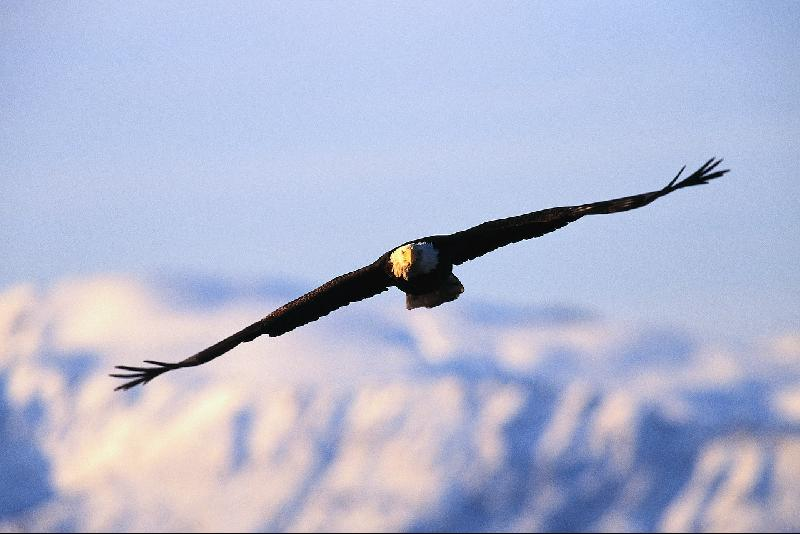 Club Treasure Eagle