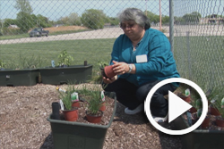 Community garden 250