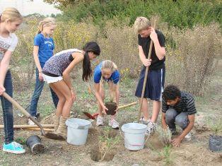 Grade 6 Native Gardens