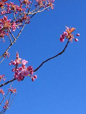 Celebrating Spring at Bodacious!
