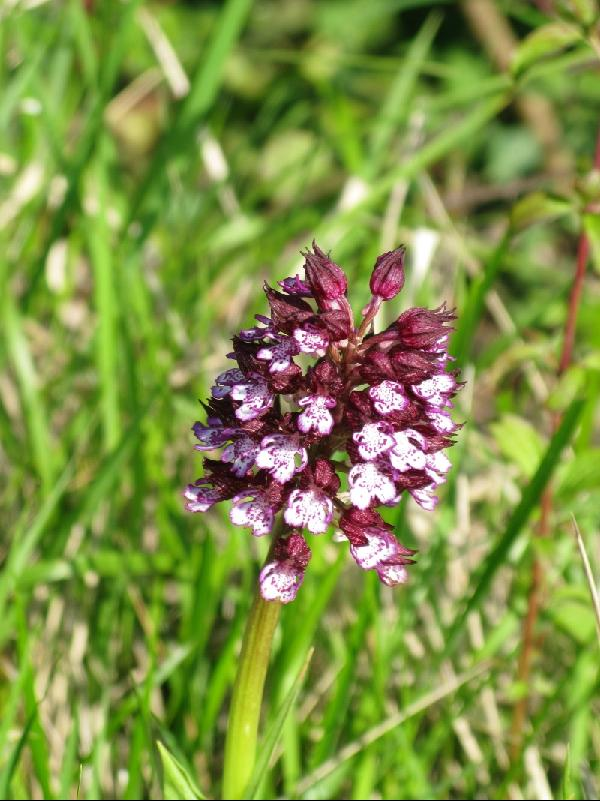 A rare orchid at the bottom of Hillside parcel