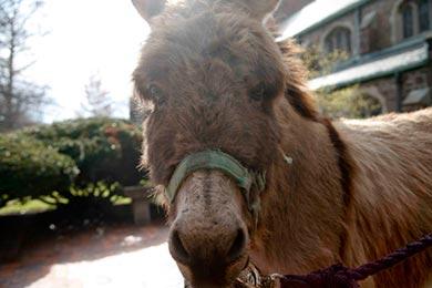 Donatello the donkey