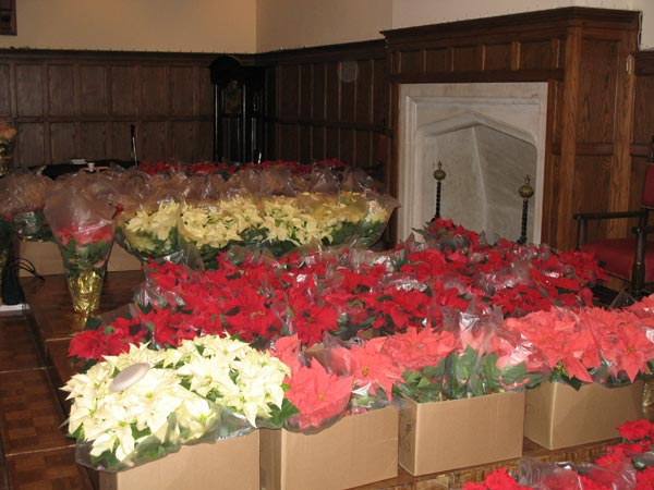 poinsettia sale in the Great Hall