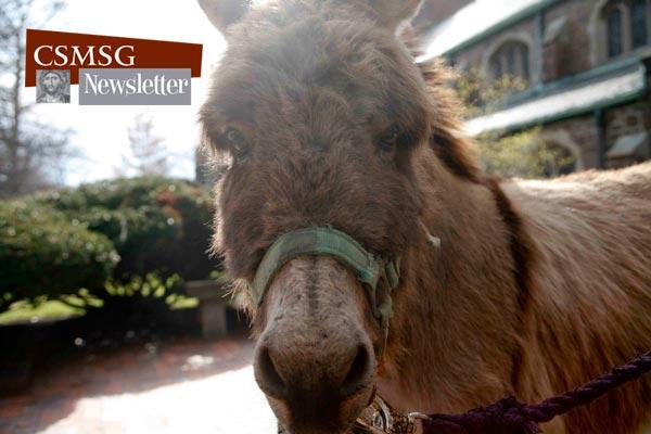 Donatello the donkey at last year's Palm Sunday procession.