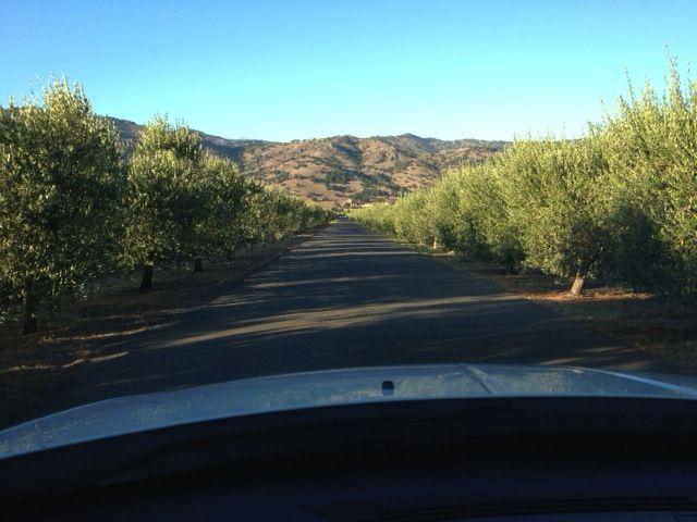 Mondavi driveway