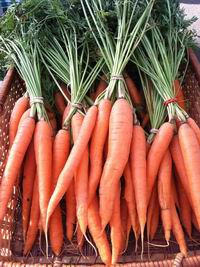 Holiday Harbor carrots