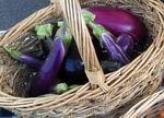 Gretchen's Eggplant