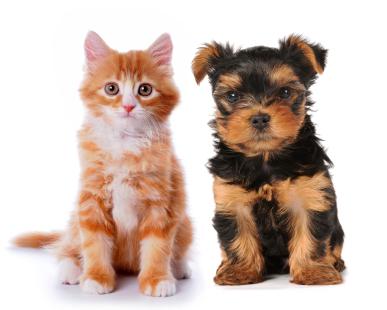 baby cat & puppy
