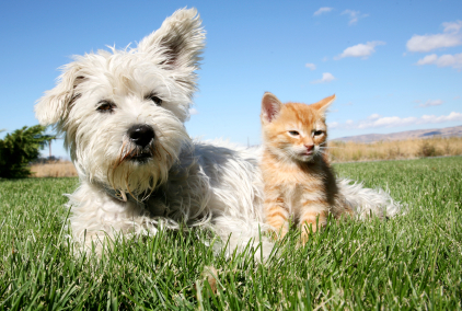 spring dog and kitten