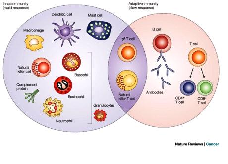 Saliva immune system