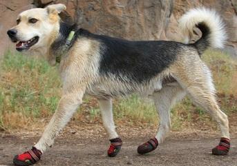 Ruff Wear boots