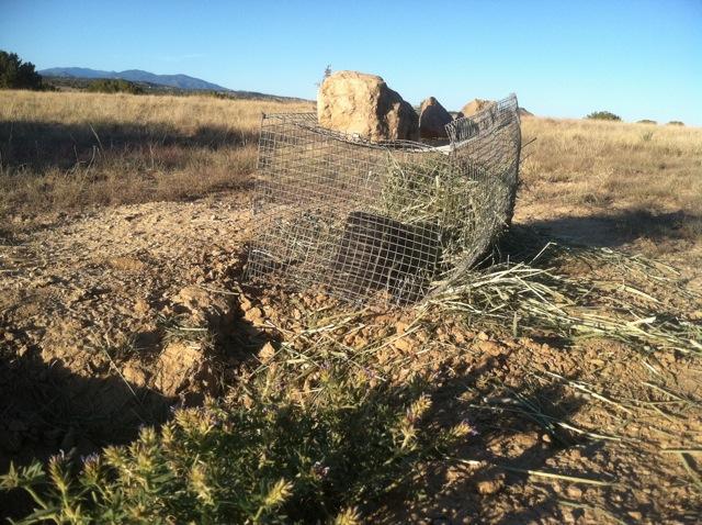 Prairie Dog Cage