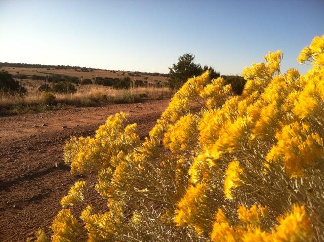 Prairie Dog Landscape
