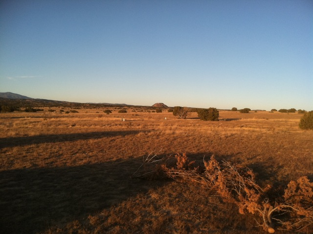 Prairie Dog Landscape, New Mexico